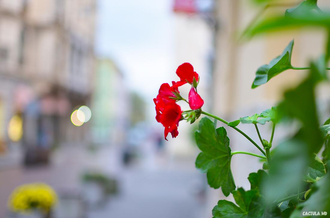 цветочек во Львове