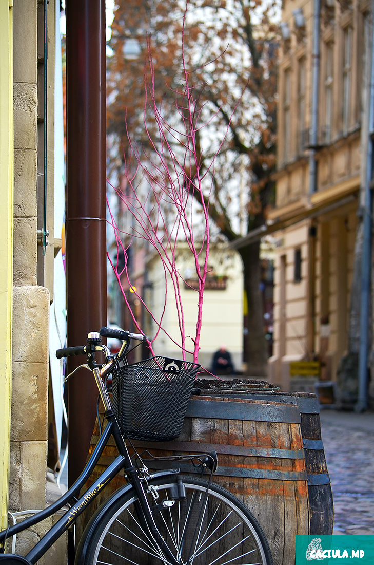 Велосипед ,бочки и фиолетовое дерево