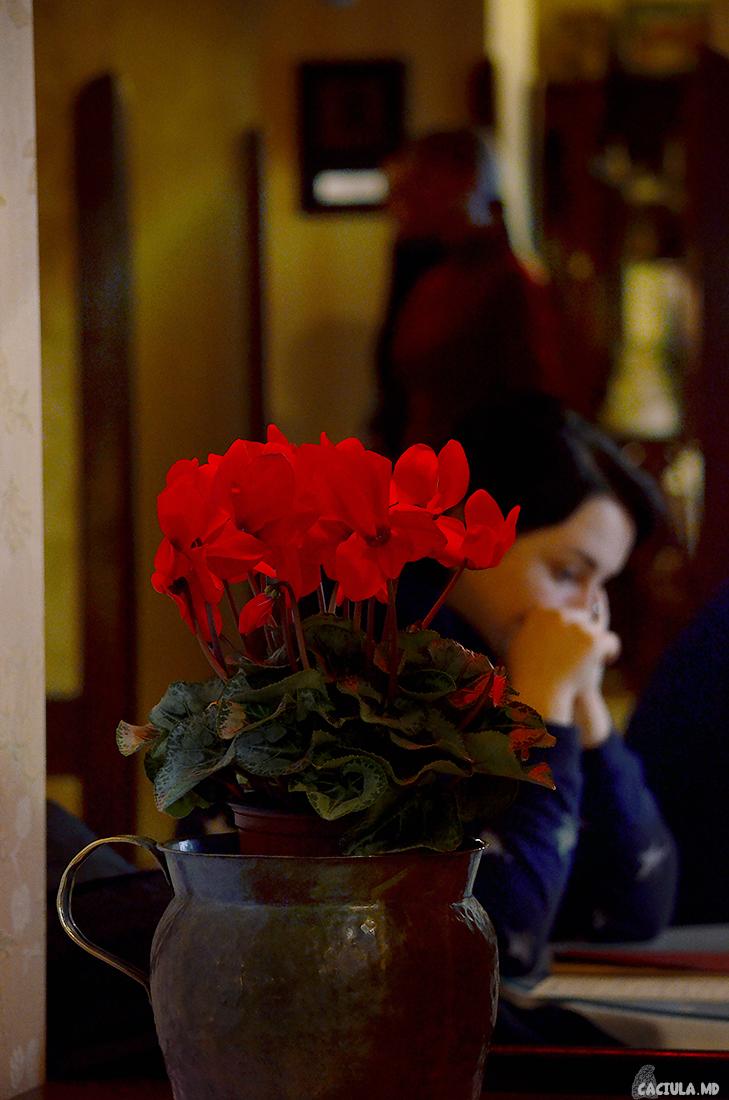 Розы и девушка в кондитерской