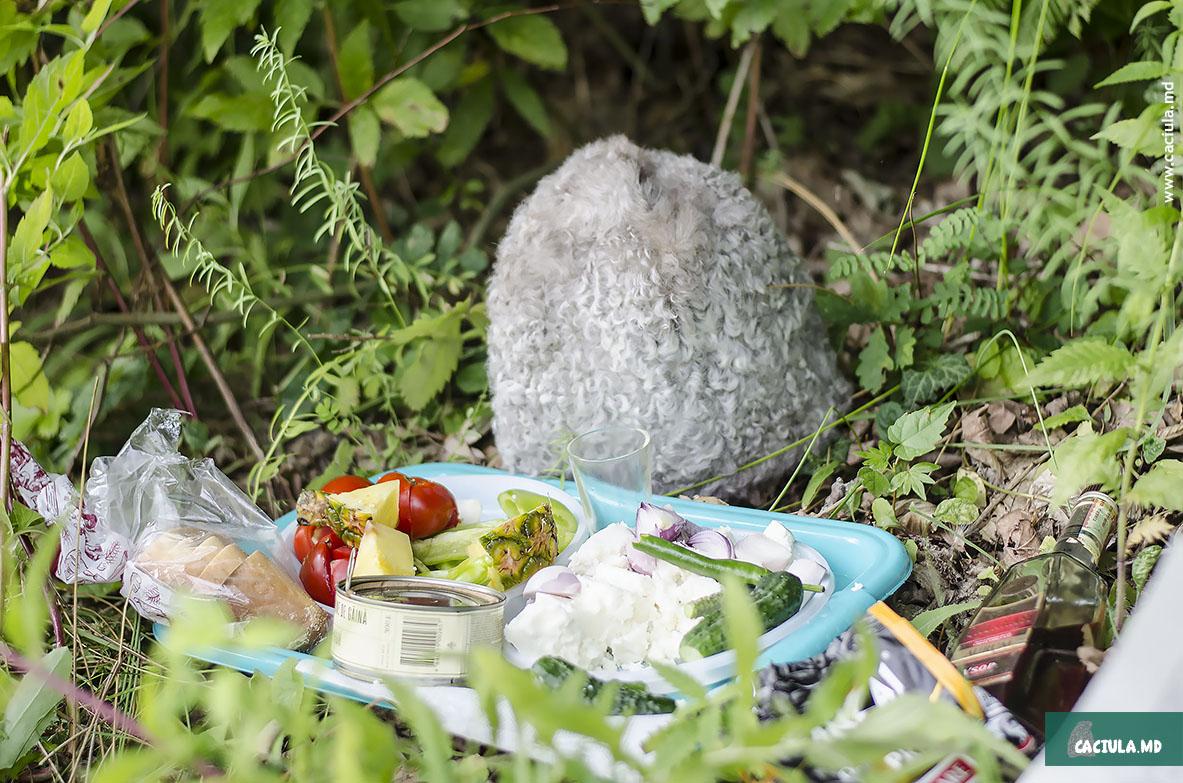 caciula закусывает на природе молдавских кодр