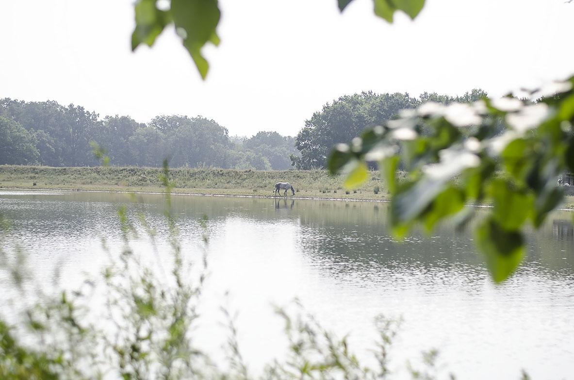 берега озера молдавских кодр