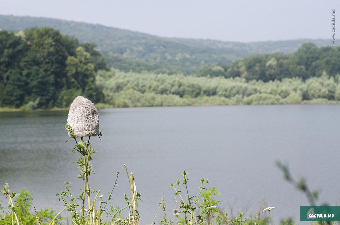 кэчула на природе молдавских кодр