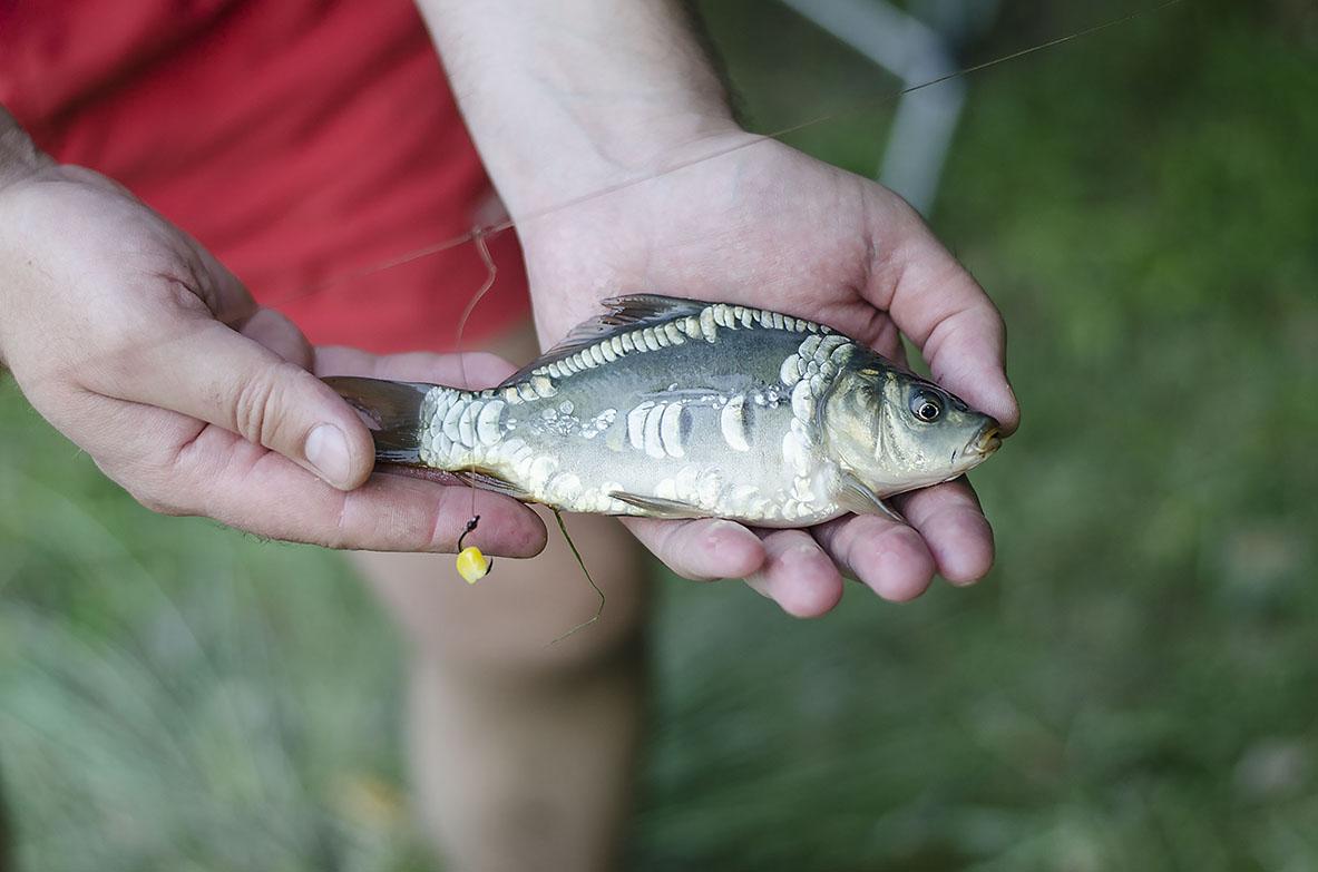 свежая рыбка молдавских кодр