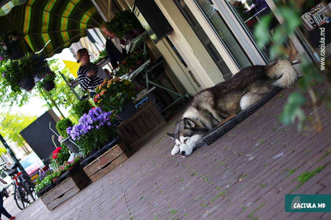 собака в Амстердаме
