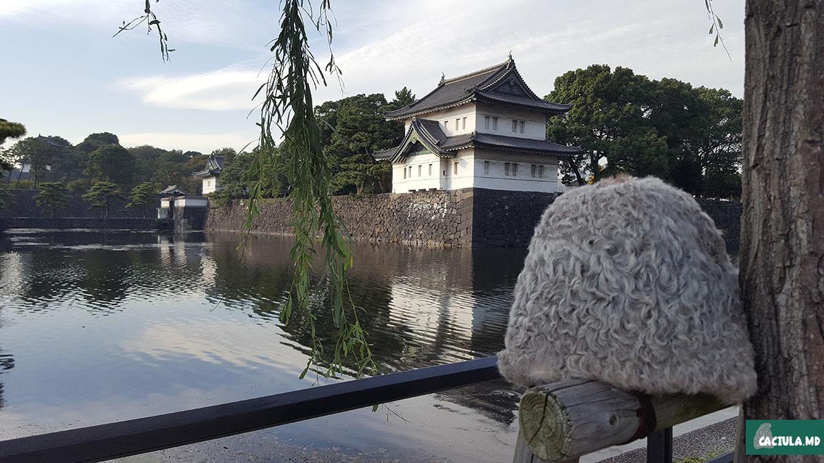токио, япония, путешествие, japan, tokyo